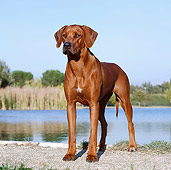 DOG 14 CB0046 01