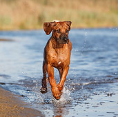 DOG 14 CB0047 01