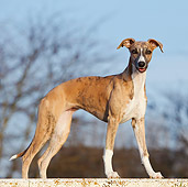 DOG 14 CB0048 01