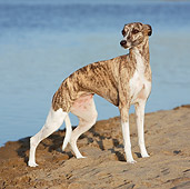 DOG 14 CB0051 01