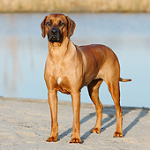 DOG 14 CB0058 01