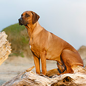 DOG 14 CB0059 01