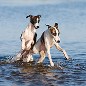 DOG 14 CB0063 01