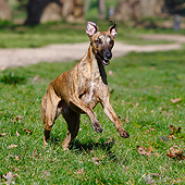 DOG 14 CB0072 01