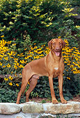 DOG 14 CE0063 01