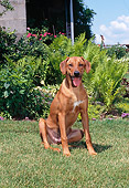 DOG 14 CE0064 01
