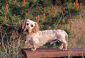 DOG 14 CE0066 01
