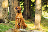 DOG 14 DB0003 01