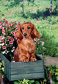 DOG 14 FA0023 01