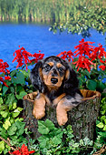 DOG 14 FA0025 01