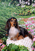 DOG 14 FA0026 01
