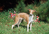 DOG 14 FA0028 01