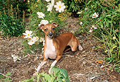 DOG 14 FA0029 01