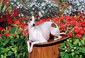 DOG 14 FA0030 01