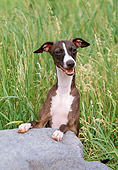 DOG 14 FA0033 01