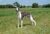 DOG 14 FA0036 01