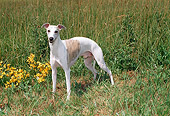 DOG 14 FA0037 01