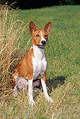 DOG 14 FA0040 01