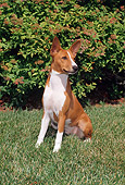 DOG 14 FA0041 01