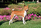 DOG 14 FA0044 01