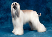 DOG 14 FA0046 01