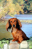 DOG 14 FA0048 01