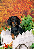 DOG 14 FA0051 01