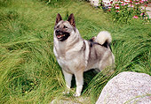 DOG 14 FA0055 01