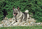 DOG 14 FA0056 01