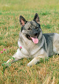 DOG 14 FA0057 01