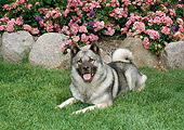 DOG 14 FA0058 01