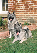 DOG 14 FA0060 01