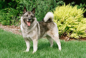 DOG 14 FA0061 01