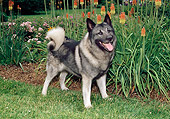 DOG 14 FA0062 01