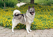 DOG 14 FA0063 01