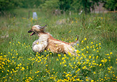 DOG 14 GL0005 01