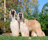DOG 14 GL0006 01