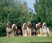 DOG 14 GL0007 01