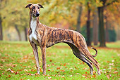 DOG 14 JE0013 01