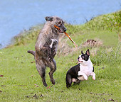 DOG 14 JE0019 01