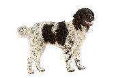 DOG 14 JE0020 01