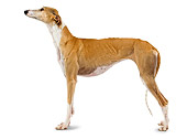 DOG 14 JE0021 01