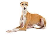 DOG 14 JE0022 01