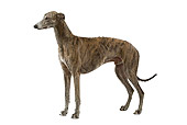 DOG 14 JE0024 01