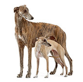DOG 14 JE0026 01