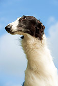 DOG 14 JE0027 01
