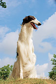 DOG 14 JE0028 01
