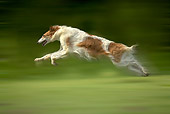 DOG 14 JE0029 01