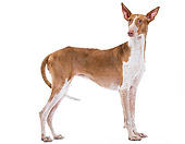 DOG 14 JE0030 01