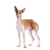 DOG 14 JE0031 01
